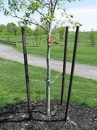 Tree Stakes or Droppers